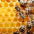 Bees on honeycells - Stockfoto
