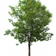 Tree — Stock Photo #9595380