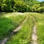 Beautiful countryside scene — Stock Photo #9596796