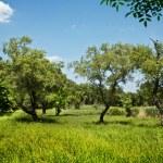 Beautiful countryside scene — Stock Photo #9596830