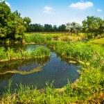 Beautiful countryside scene — Stock Photo #9597211