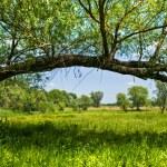 Beautiful countryside scene — Stock Photo #9597236