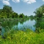 Beautiful countryside scene — Stock Photo #9597237