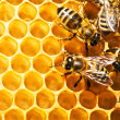 Bees on honeycells — Stock Photo #9597963
