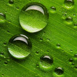 Water drops on fresh green leaf — Stock Photo #9598955