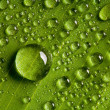 Water drops on fresh green leaf — Stock Photo