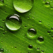 Water drops on fresh green leaf — Stock Photo #9598979