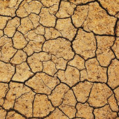 Field of baked earth — Stock Photo