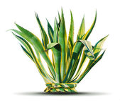 Palmeira — Foto Stock