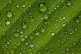 Gotas de agua — Foto de Stock