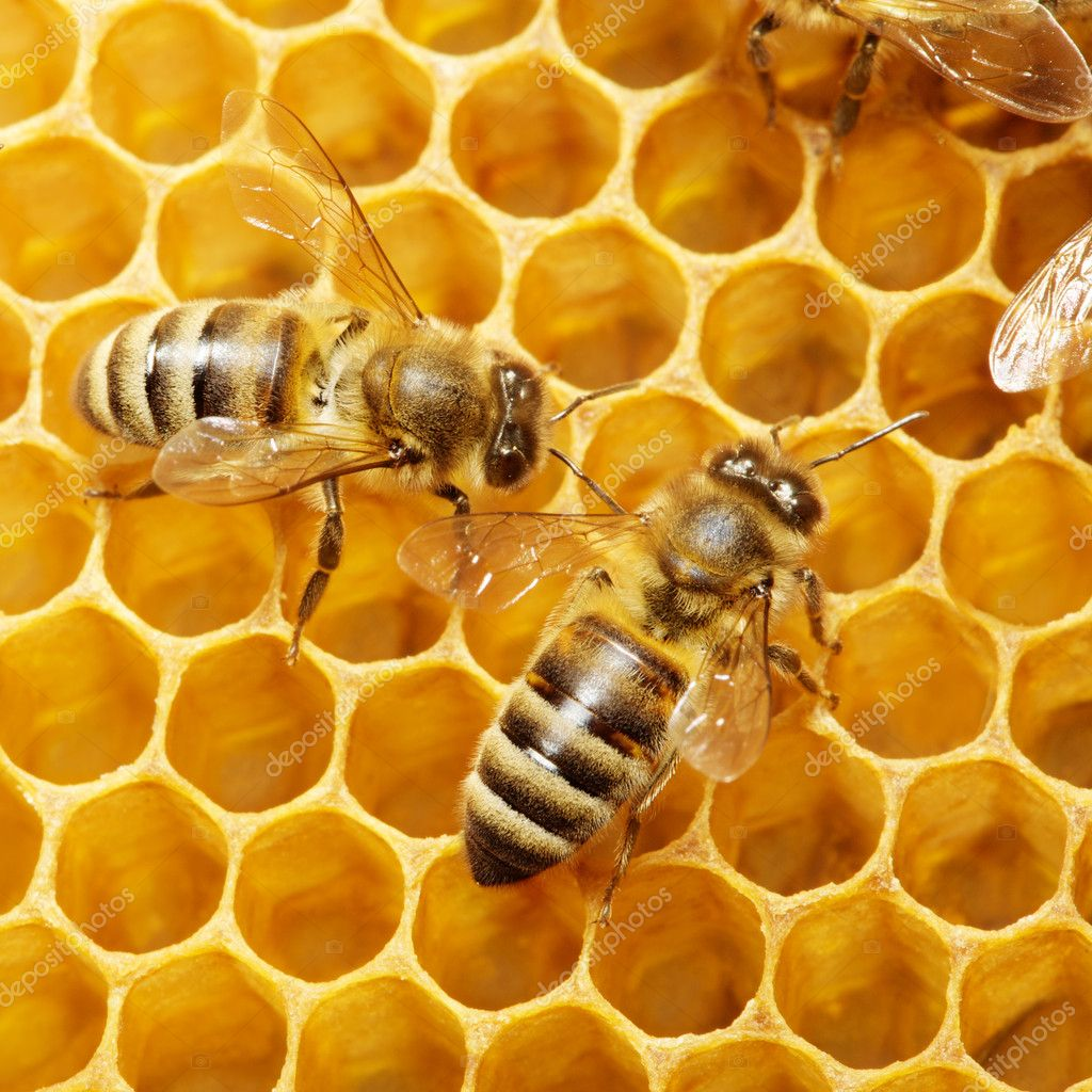 Macro of working bee on honeycells. — Stock Photo #9594759