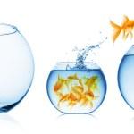 närbild bild av fisk skål isolerade — Stockfoto