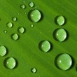 Green leaf with drops of water — Stock Photo #9600767