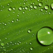 Green leaf with drops of water — Stock Photo #9600819