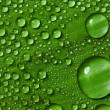 Green leaf with drops of water — Stock Photo #9600861