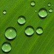Green leaf with drops of water — Stock Photo #9600910