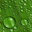 Green leaf with drops of water — Stock Photo #9600945