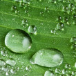 Green leaf with drops of water — Stock Photo #9600975