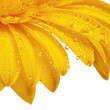 Close up view of yellow daisy — Stock Photo #9601882