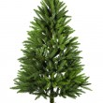 Голые Рождественская елка — Стоковое фото