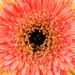 Close up view of yellow daisy — Stock Photo #9605501