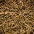 Stock Photo: Hay texture background