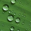 Water drops on fresh green leaf — Stock Photo #9606786