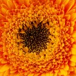Close up view of yellow daisy — Stock Photo #9606964