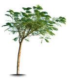 Isolated green tree — Stock Photo