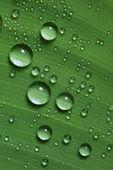 Gotas de água na folha verde fresca — Foto Stock