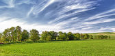 Several trees on the field and clouds — Stock Photo