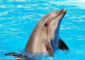海豚 — 图库照片
