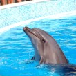 Dolphin's dancing — Stock Photo