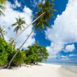 Coconut palms at beach — Stock Photo
