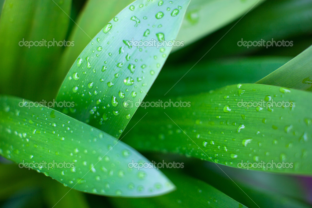 Water drops on leaves in nature — Stock Photo #10146908