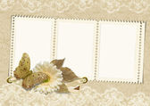 Vintage frame on lace background with butterfly and flower — Stock Photo