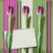 Retro greeting card with tulips — Stock Photo