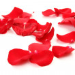 Stock Photo: Petals of roses