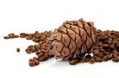 Pine nut — Stock Photo