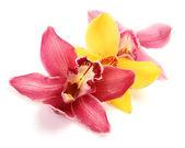 Fine orchids — Stock Photo