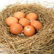 Eggs in a jack — Stock Photo