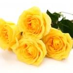Fine roses — Stock Photo #10479083