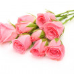 Fine roses — Stock Photo #10479275