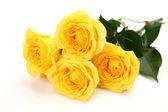 Finas rosas — Foto de Stock