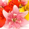 Color lilies — Stock Photo