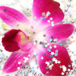 Pink orchid — Stock Photo #9918920