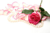 Rose and pearls — Stockfoto