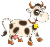 Cow animal — Stock Photo