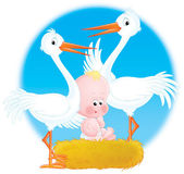 Storks and Baby — Stock Photo