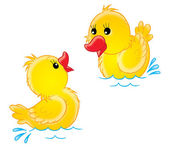 Swimming yellow chiks — Stock Photo
